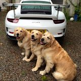 dogs great creatures small pistonheads