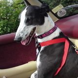 retired rescue official greyhound pistonheads